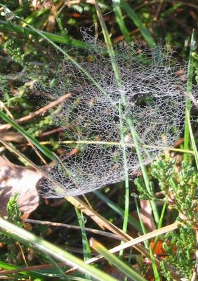 spiderweb in early morning