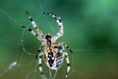 Spider(wo)man?!