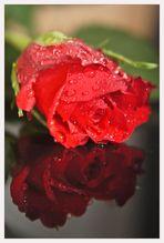 Spiegel - Rose