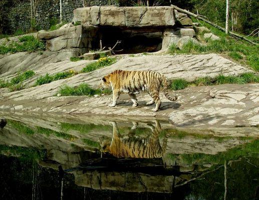 Spiegel Tiger