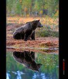 Spiegelbär