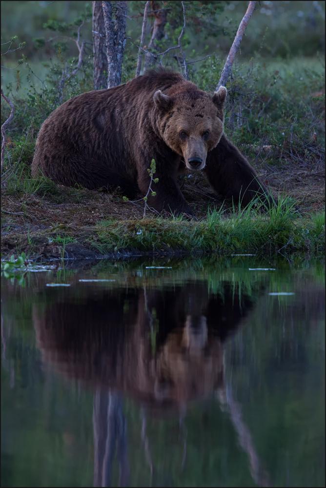 Spiegelbär - Bärenspiegel