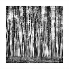 Spiegelbäume