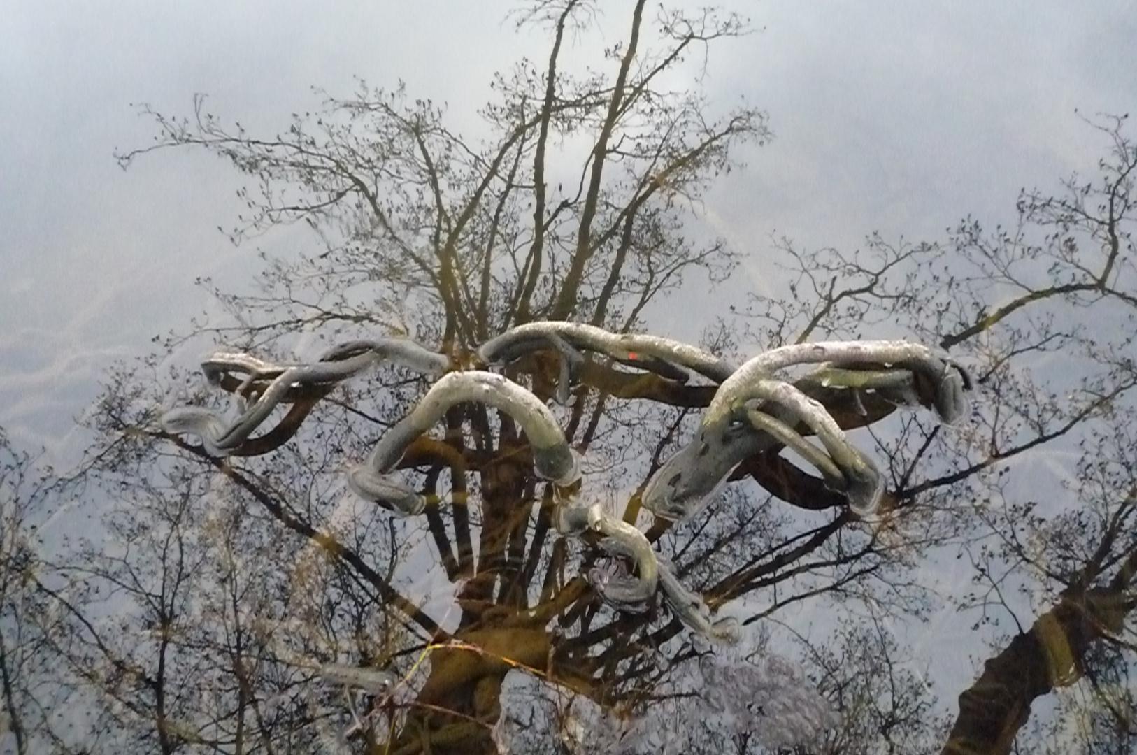 Spiegelbild eines Baumes zerfliesst mit Wurzel
