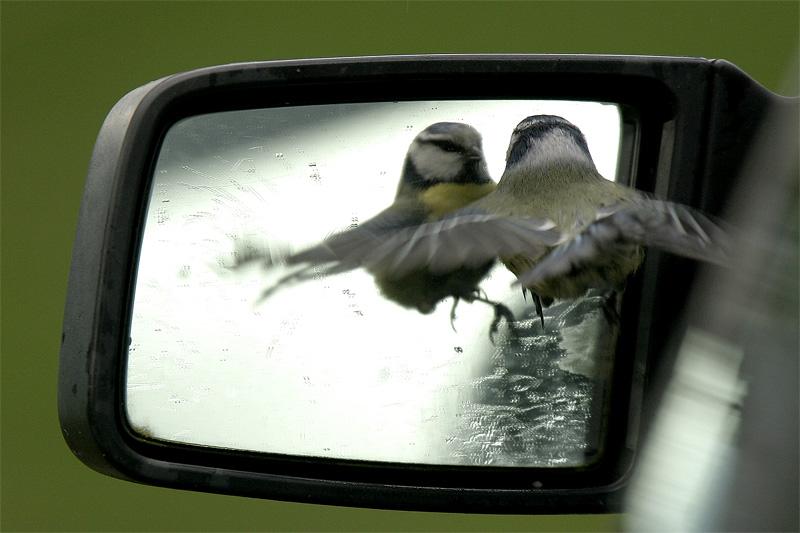 Spiegelbilder...