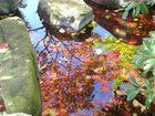 Spiegellung am Wasser Steingarten.