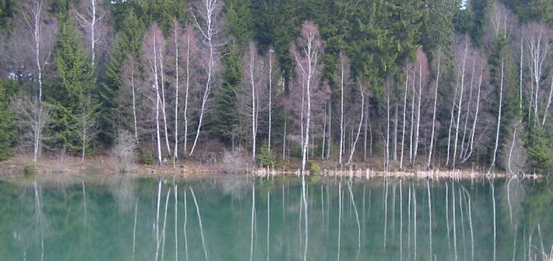 Spiegelnde Bäume