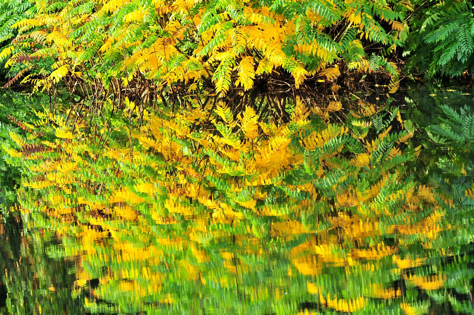 Spiegelnde Herbststimmung