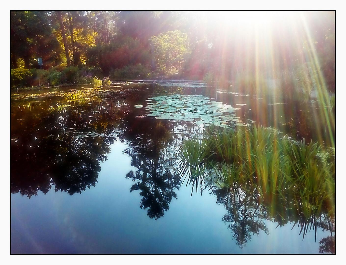 Spiegeltag- Spiegelung der herbstlichen Bäume