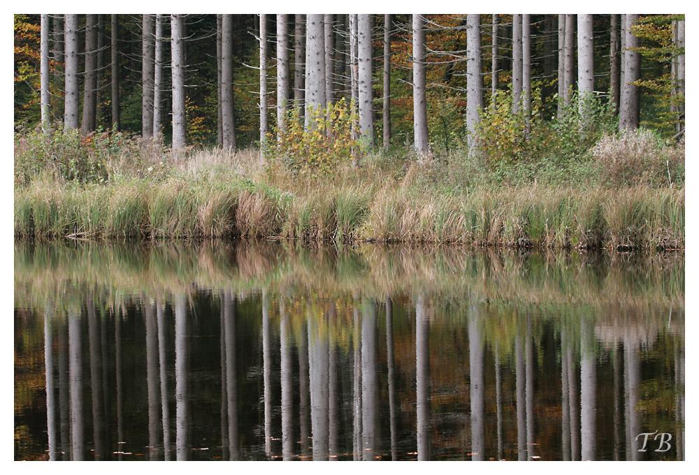 Spiegelung am Hackensee