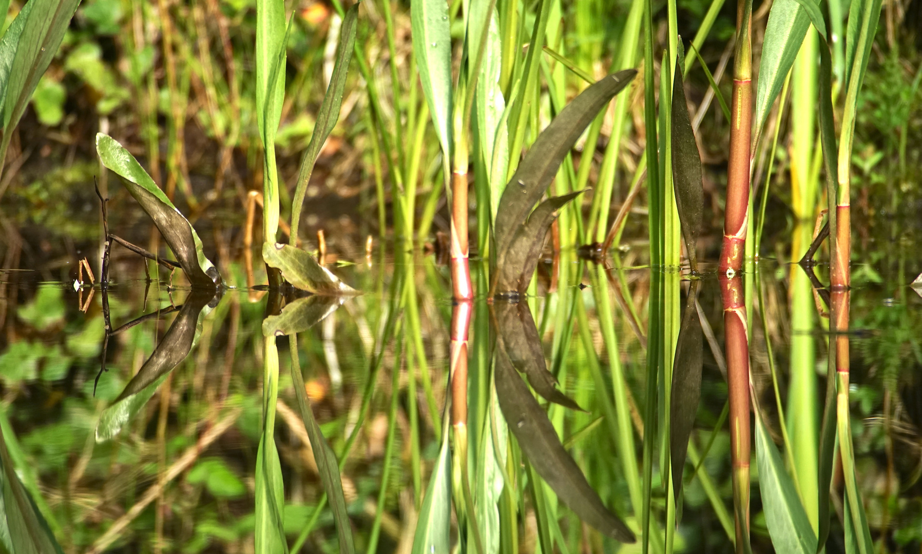 Spiegelung am Teich 3