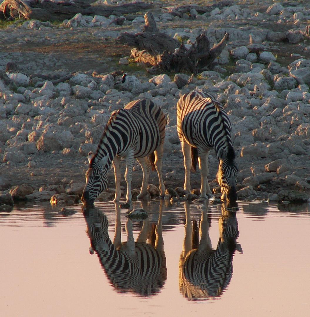 Spiegelung am Wasserloch - Namibia