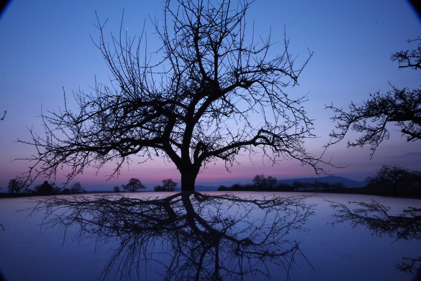 Spiegelung der Natur