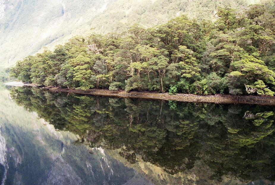 Spiegelung - Doubtful Sound / Neuseeland