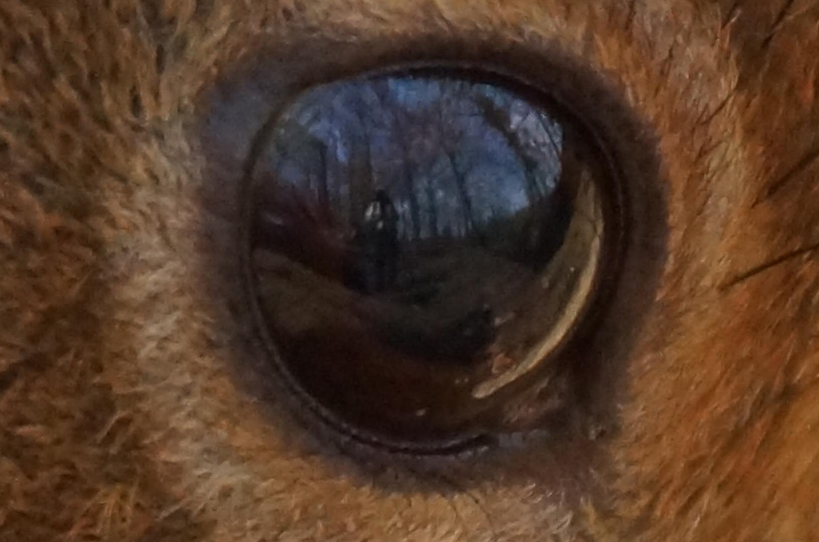 Spiegelung im Auge