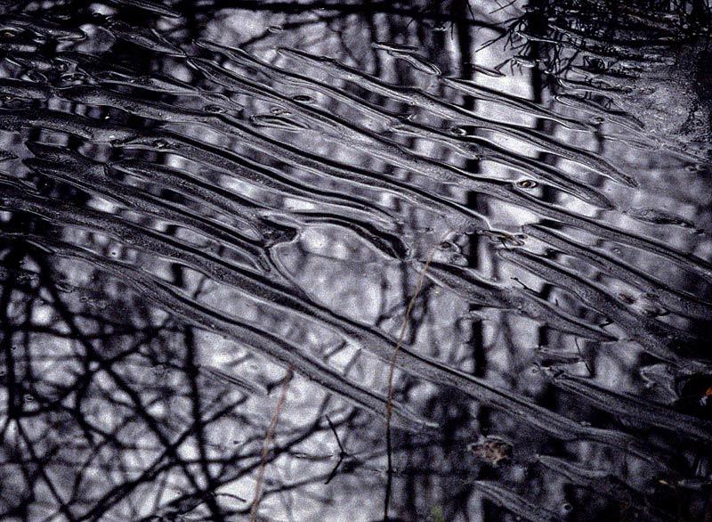 Spiegelung im Eis II