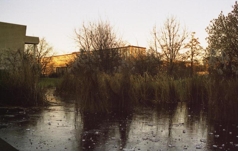 Spiegelung im gefrorenen Uni-Teich