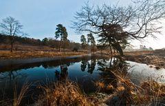 Spiegelung im Naturschutzgebiet Wahner Heide