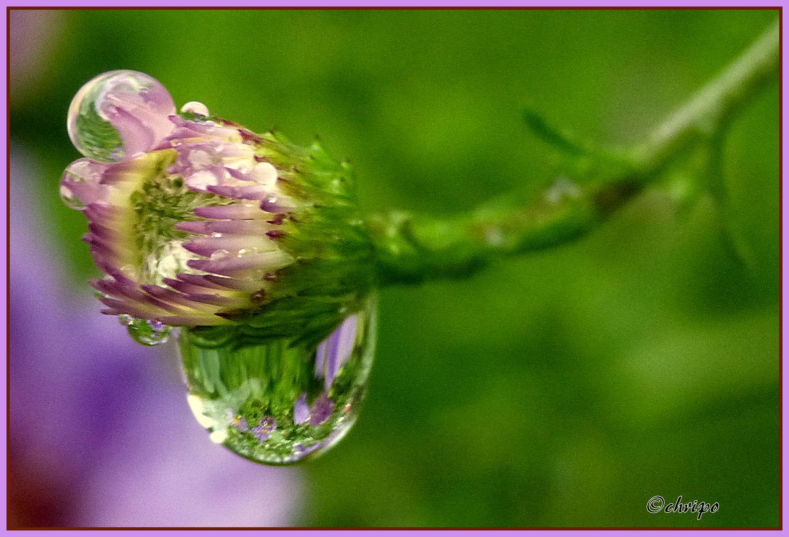 Spiegelung im Regentropfen