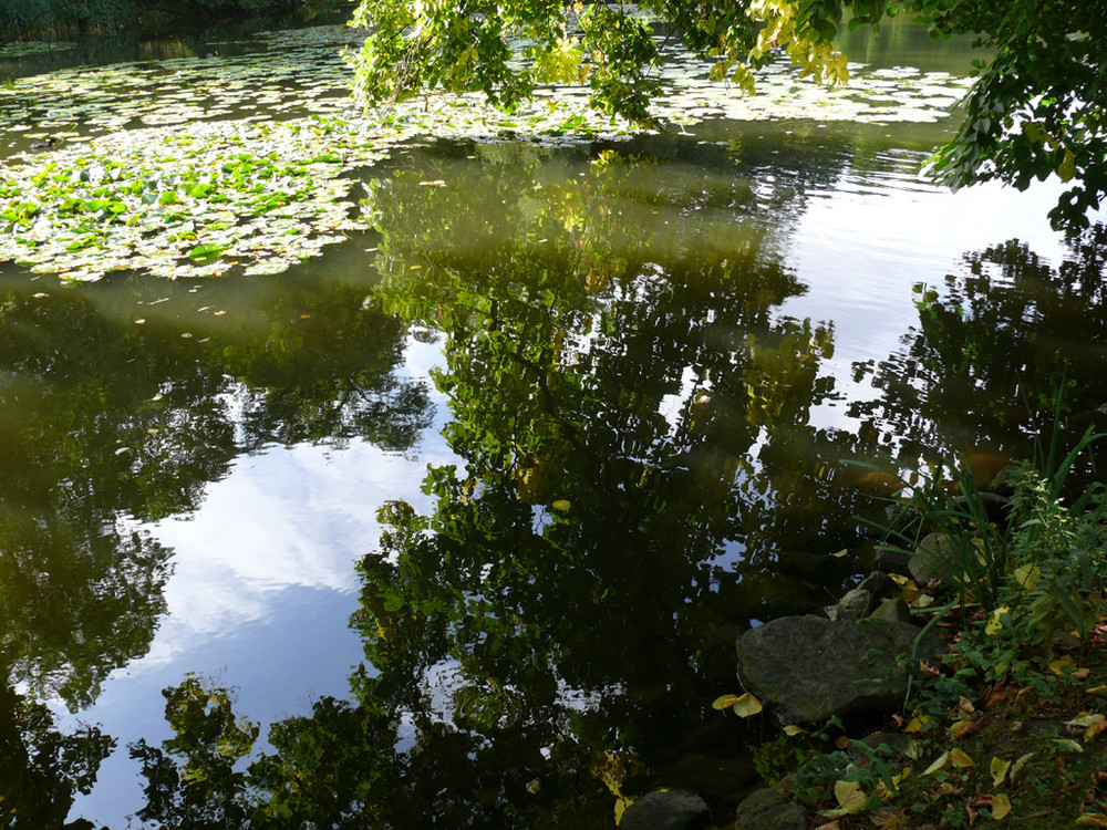Spiegelung im Sielpark Bad Oeynhausen