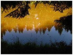 Spiegelung im Waldteich