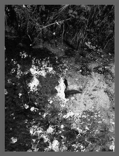 Spiegelung im Wasser, Pflanzen am Ufer