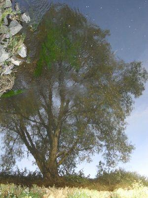 Spiegelung in der Lahn