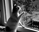 Spiegelungen im Fenster...