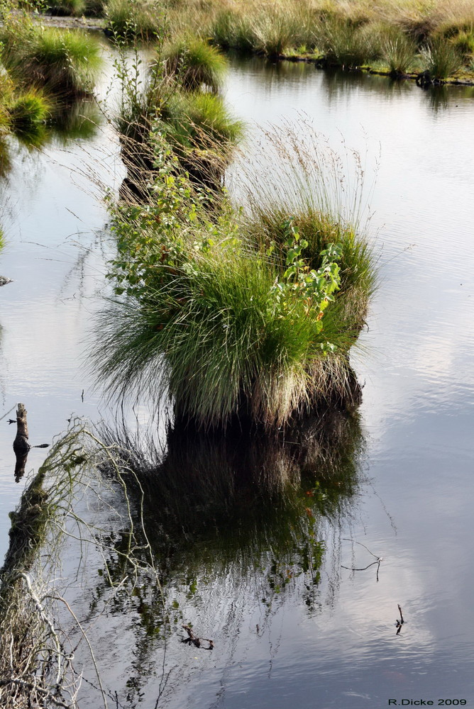 Spiegelungen im Moor