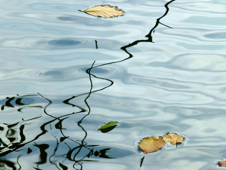 Spiegelungen im Teich