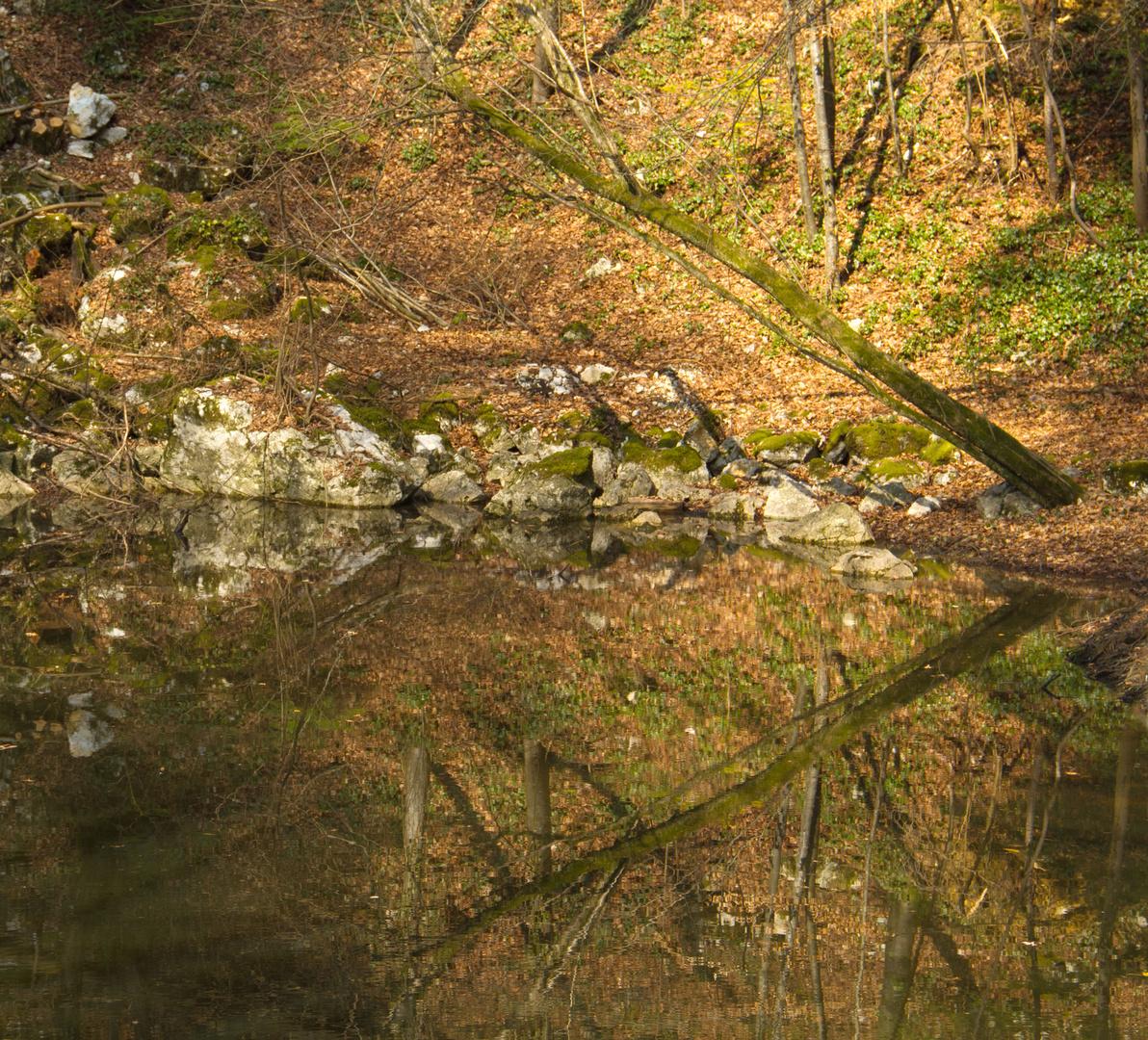 Spiegelungen im Waldteich
