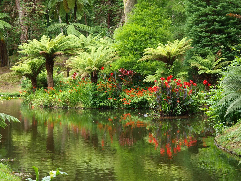 Spiegelungen, Parque Florestal Furnas Sao Miguel