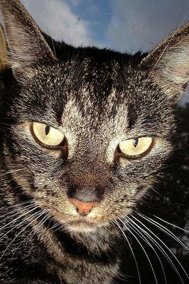 Spieglein Spieglein an der Wand, wer ist die schönste Katze hier im Land ?
