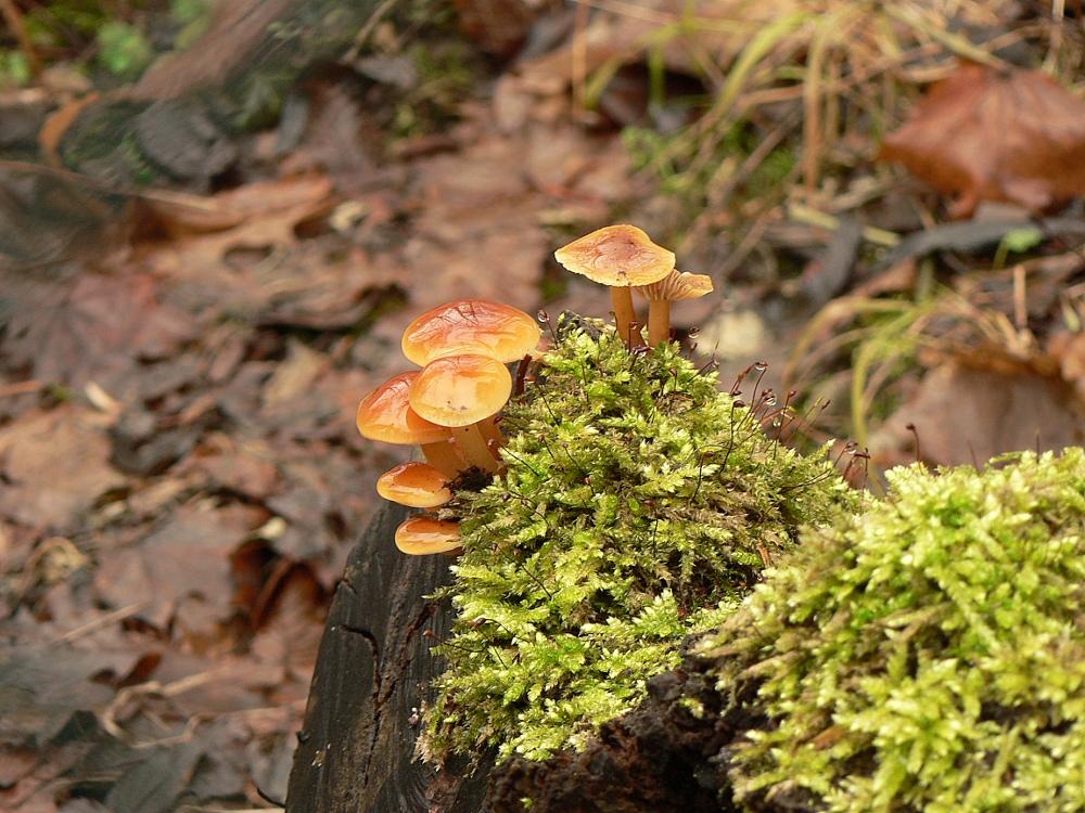Spieglein, Spieglein auf dem Pilz
