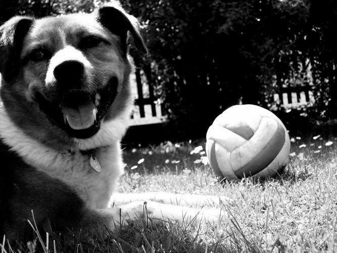 spiel ball mit mir...