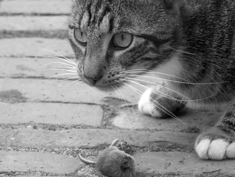 Spiel mit dem Tod