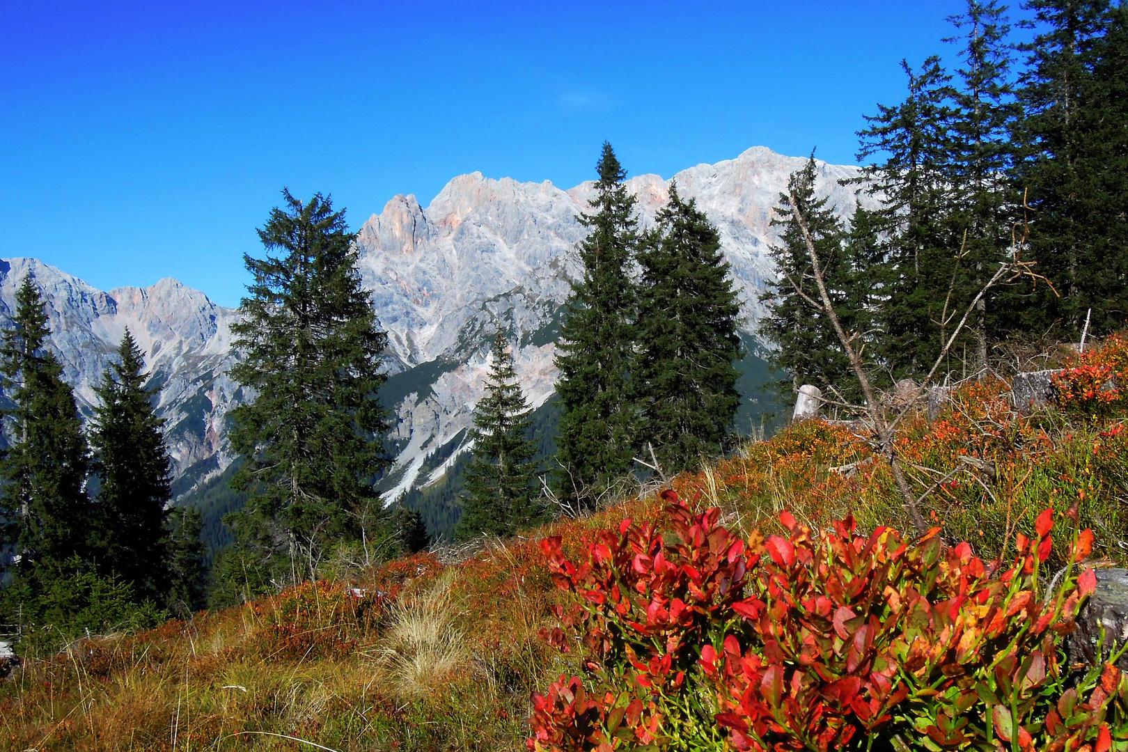Spiel mit den Farben des Herbstes