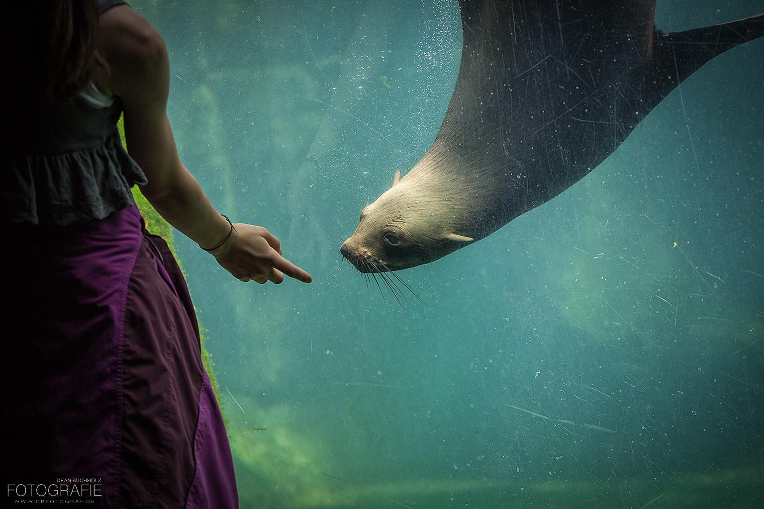 Spiel mit der Robbe