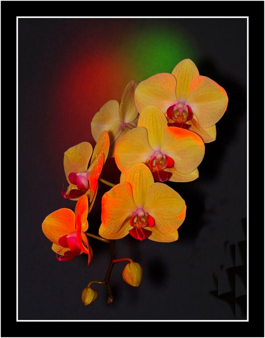 Spiel mit Licht und Farben