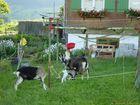 Spiel mit roter Schüssel - Ziegenfütterung