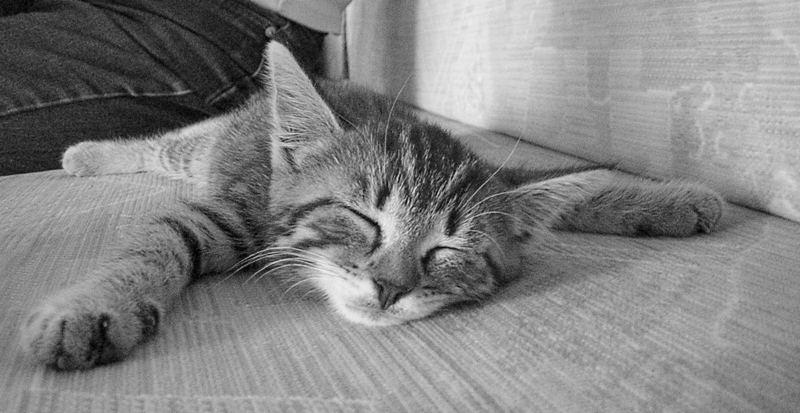 Spielen macht ja sooo müde!