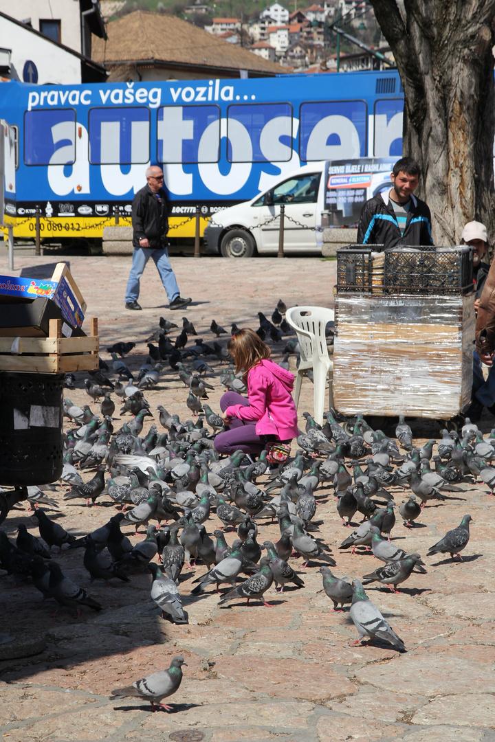 Spielen mit den Tauben
