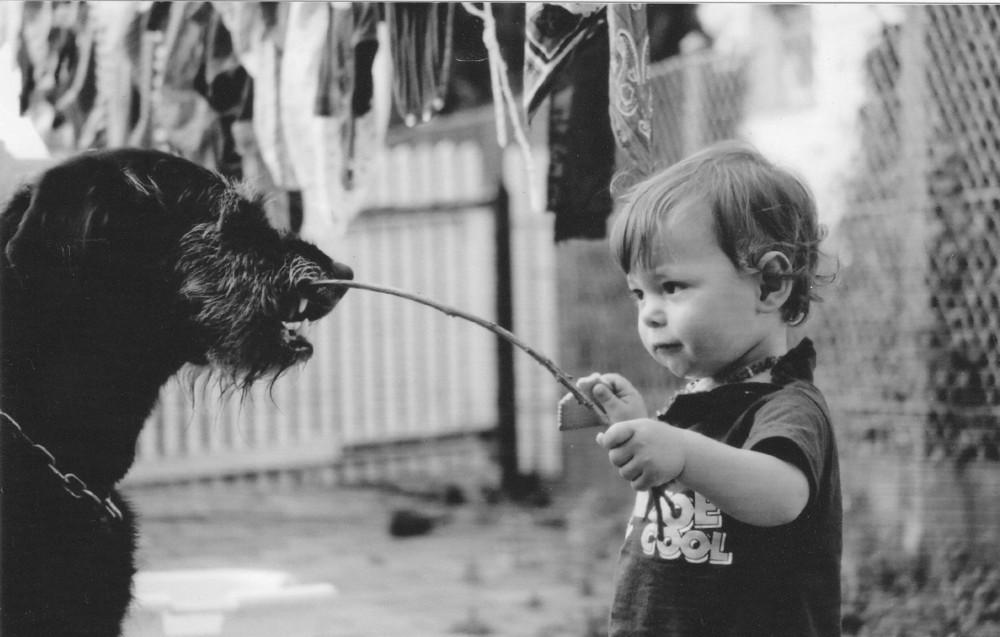 spielen wir hunde ärgern!
