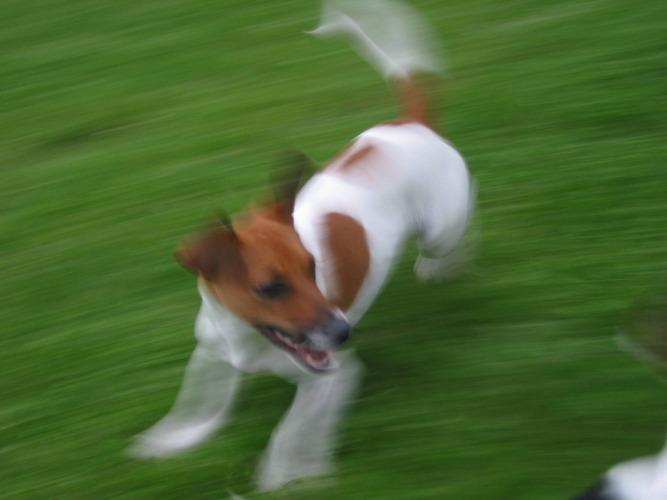 Spielender Hund
