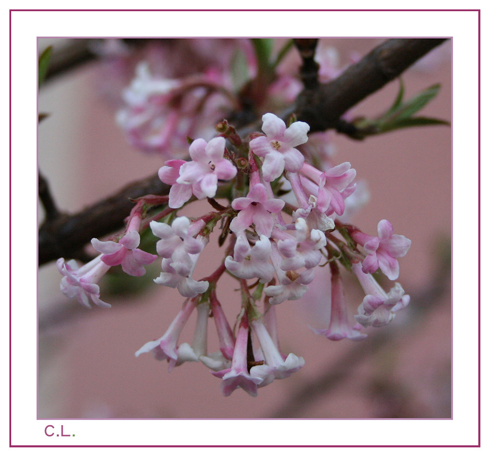Spielerei in rosa