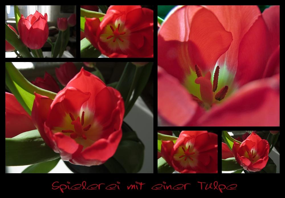 Spielerei mit einer Tulpe