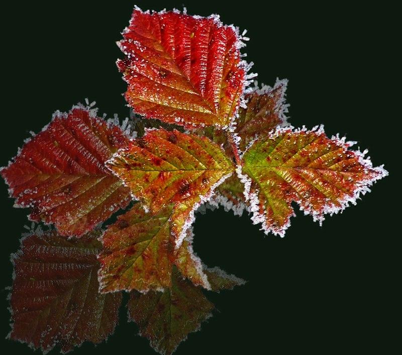 Spielerei mit Herbstblättern
