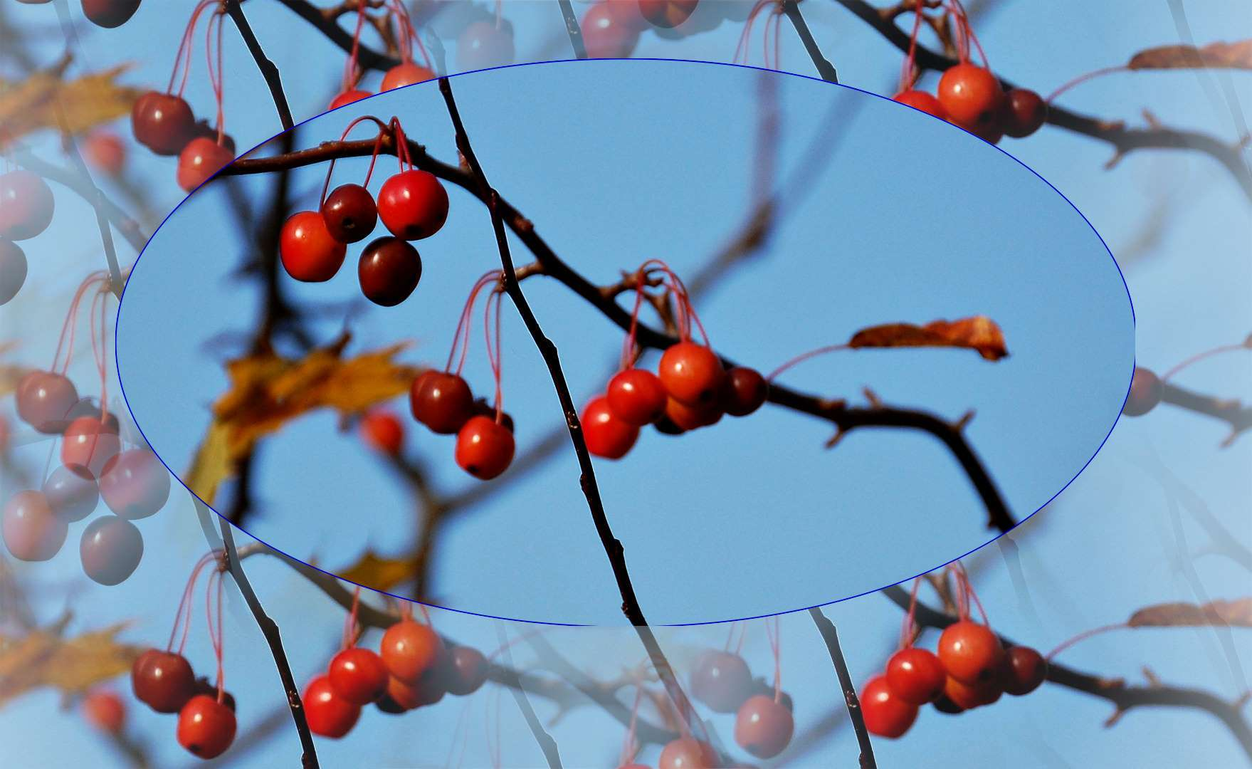 Spielerei mit roten Beeren