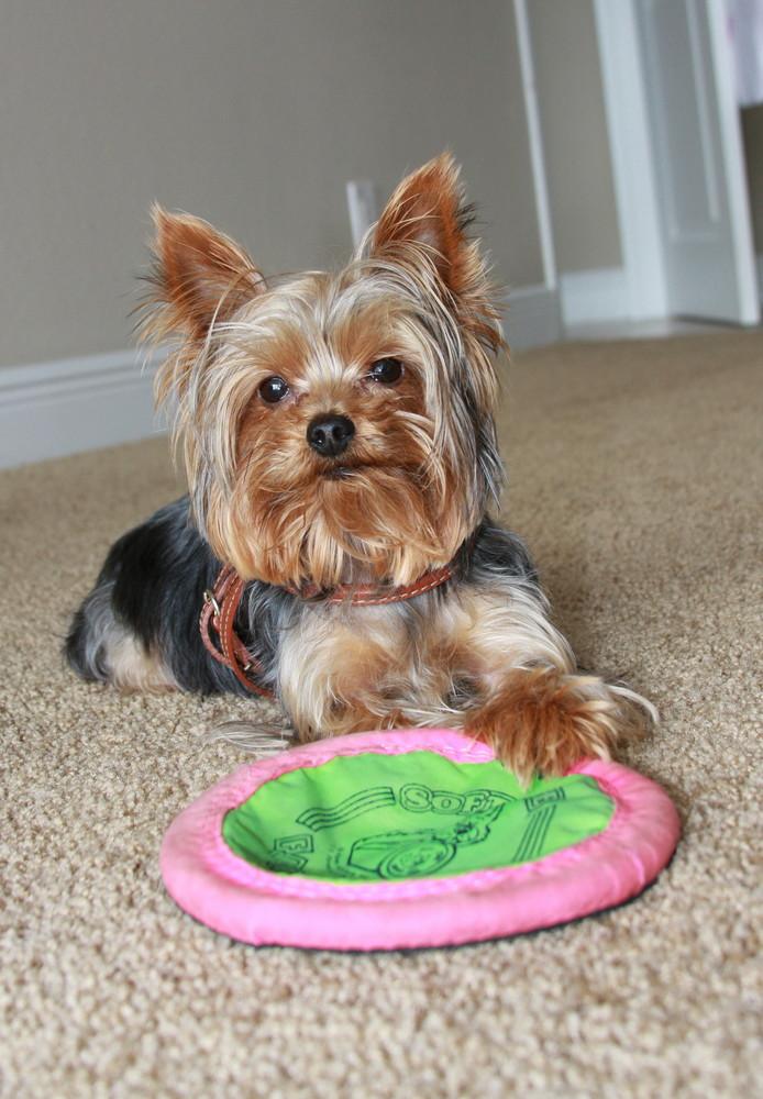 Spielst jetzt endlich mit mir?!