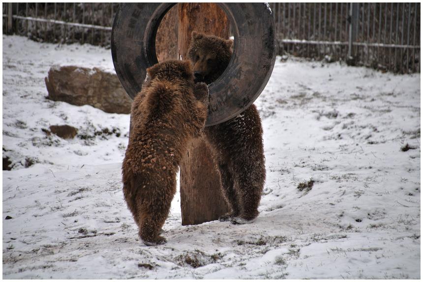 Spielstunde bei den Bären